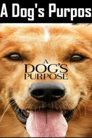 A Dog's Purpose (2017) Online Free Watch Full HD Quality Movie