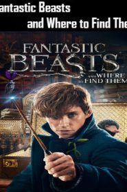 Fantastic Beasts and Where to Find Them (2016) Online Free Watch Full HD Quality Movie