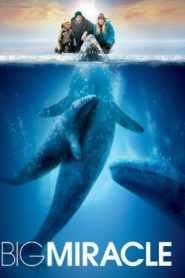 Big Miracle (2012) Online Free Watch Full HD Quality Movie