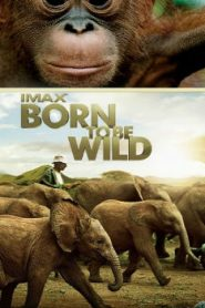Born to Be Wild (2011) Online Free Watch Full HD Quality Movie