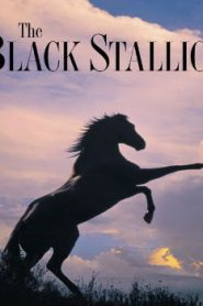 The Black Stallion (1979) Online Free Watch Full HD Quality Movie